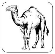 Kamelflaumhaar