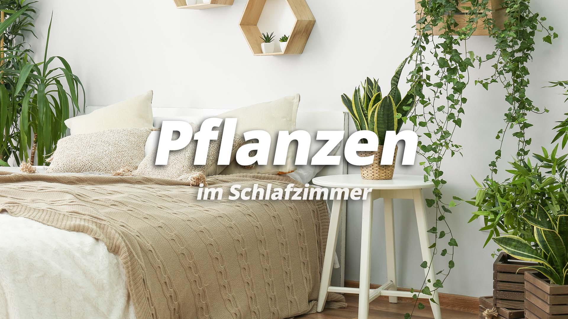 pflanzen-im-Schlafzimmer