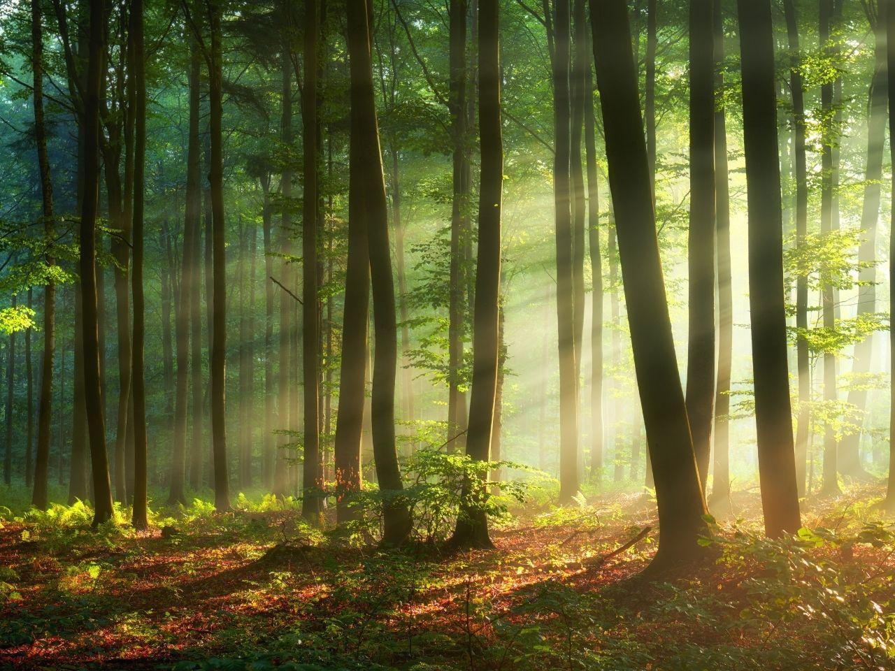 schlafsystem massivholz